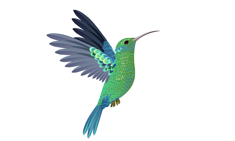 Google Hummingbird Algoritması